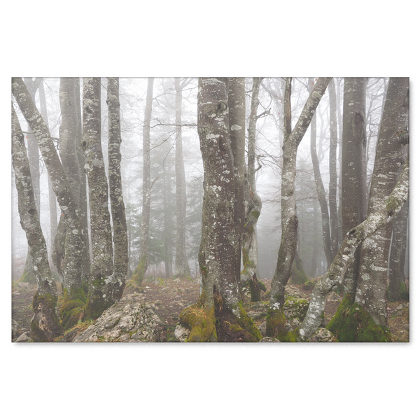 Trees in Fog - Canvas Print