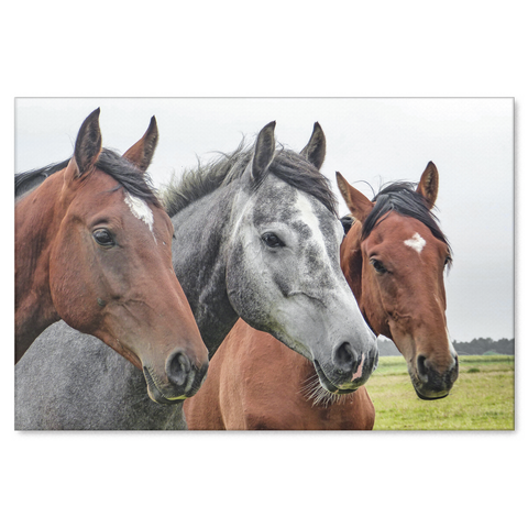 Canvas Print of 3 Elegant Horses.