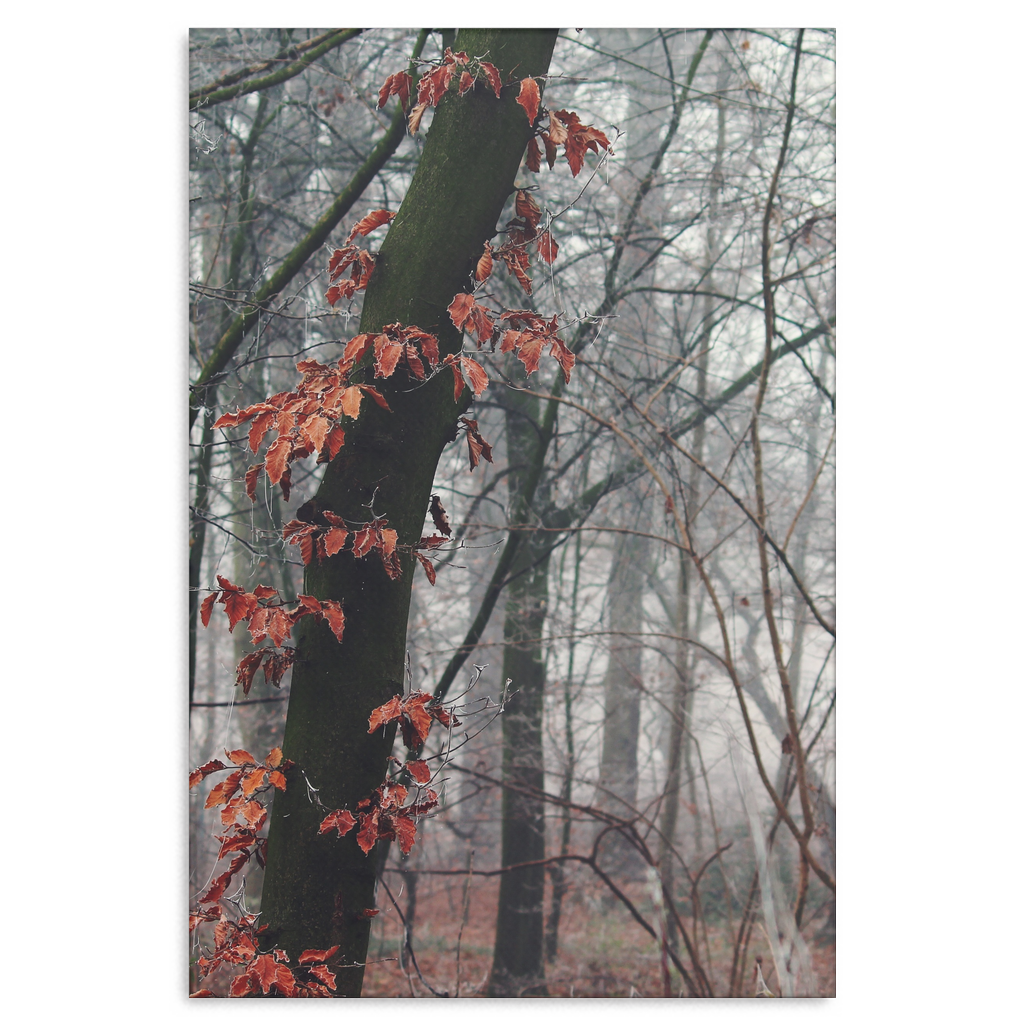 Forest Fog - Canvas Print