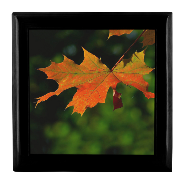 Red Maple Leaf in a Black Stain Wooden Jewelry Box