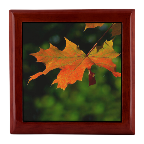 Red Maple Leaf in a Red Mahogany Wooden Jewelry Box