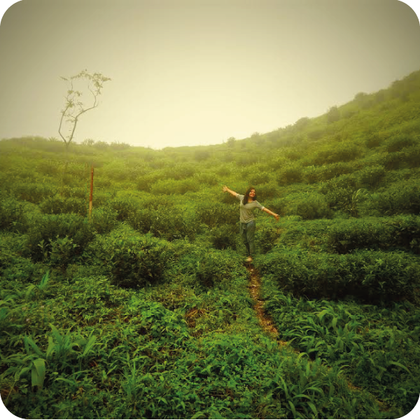 7 Scenic and Little-Known Tea Towns of India