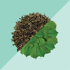 Spearmint Green Tea - Tea Trunk
