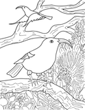 AWE Hawaiian Wildlife Coloring Book