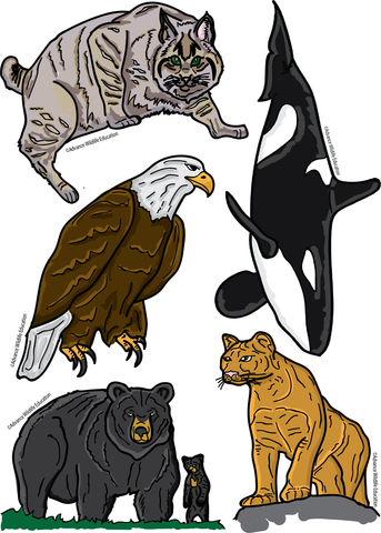 Sticker Sheet Pacific Northwest