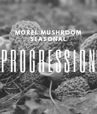 Morel Mushrooms - Seasonal Progression