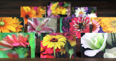 10-Pack Flower Assorted Petite Notecards
