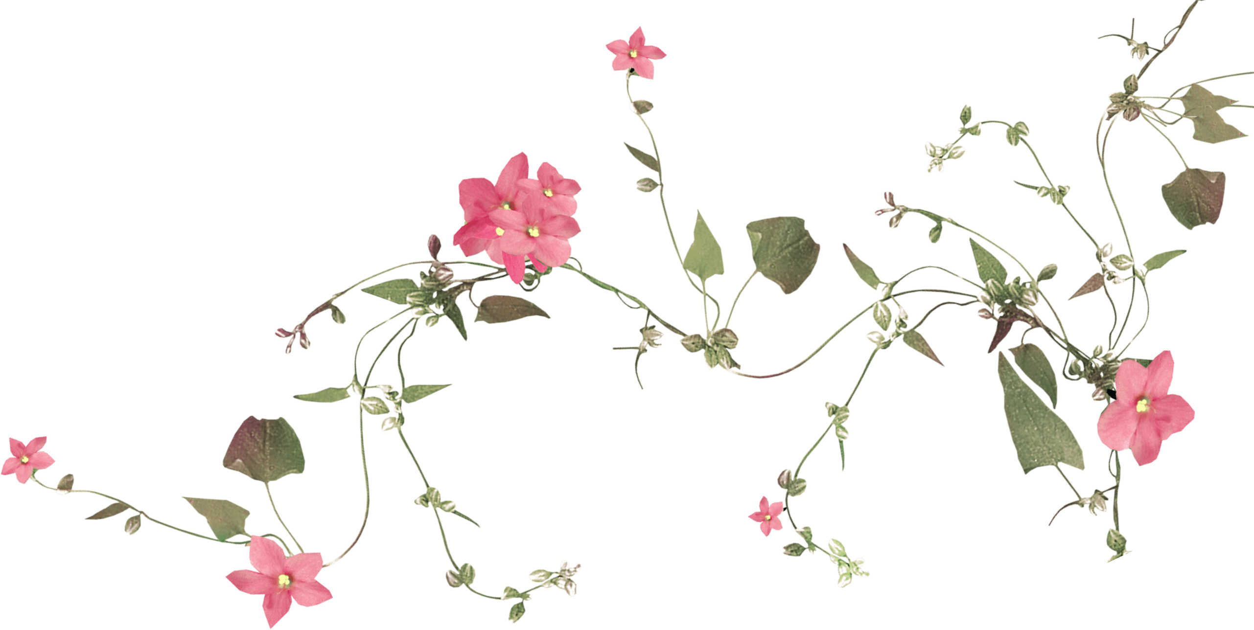 flowers and vine
