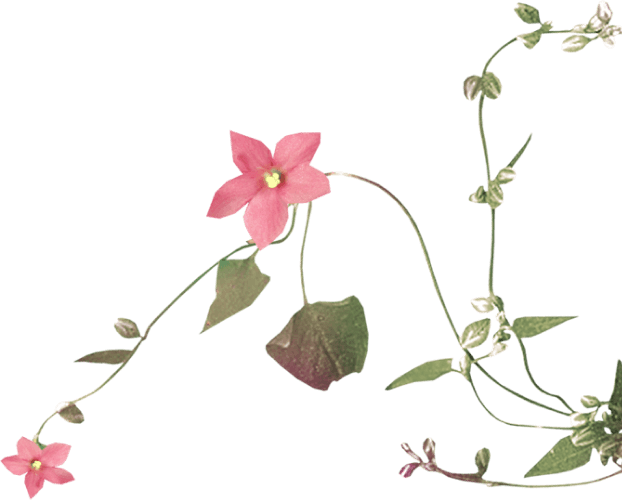 Flower vine right