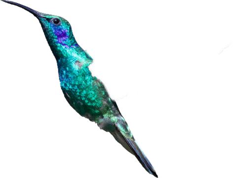 hummingbird body
