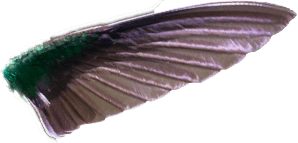 hummingbird front wing