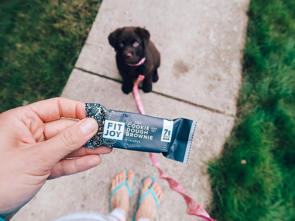 dog walk with mini protein bars