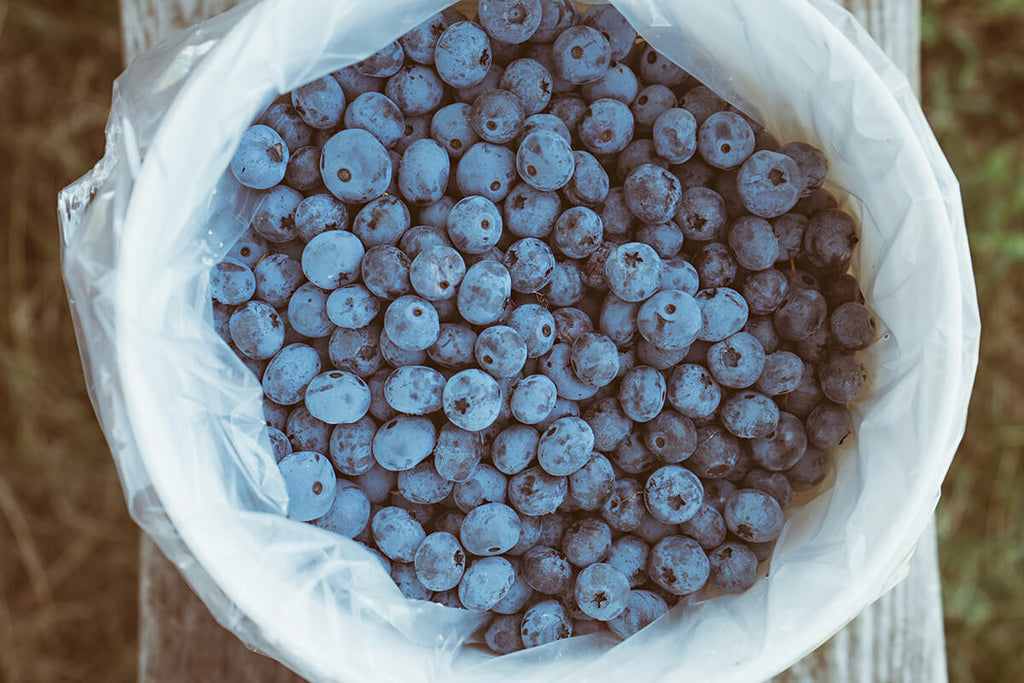 bowl full of blueberries