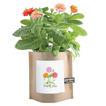 Zinnia Garden in a Bag