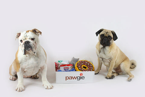 Toy & Treat Pawgie Box