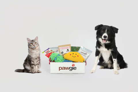 Cat & Dog Pawgie Box