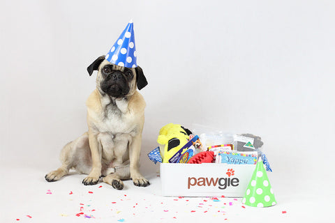 Birthday Pawgie Box