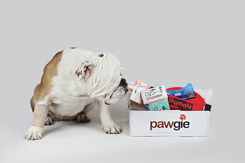 Get Well Pawgie Box