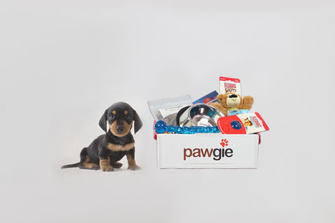New Puppy Pawgie Box