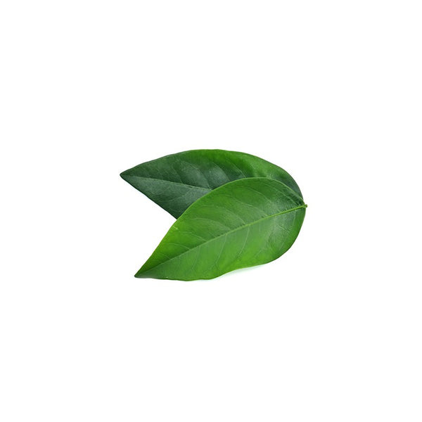Herbilogy Sweet Leaf Extract Powder (Daun Katuk)