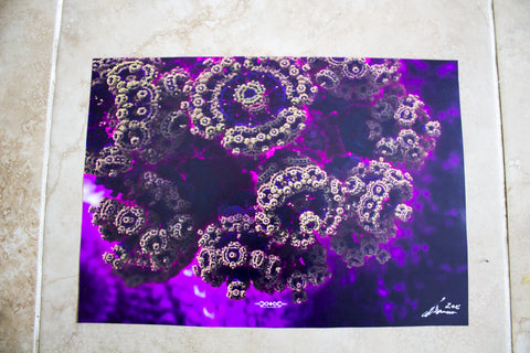 "Discounted Paper Print of ""Fuschia Coral"""