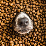 Pooch & Mutt - Complete Dry Dog Food - Health & Digestion (Grain Free & 100% Natural)- Salmon & Sweet Potato, 2kg