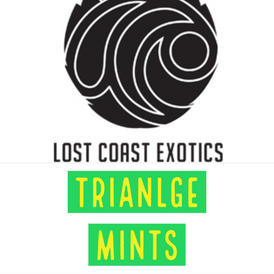 Lost Coast / Triangle Mints