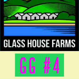 Glass House / GG #4