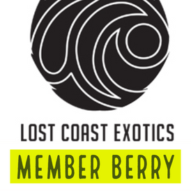 Lost Coast / Member Berry