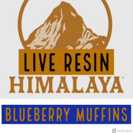 Himalaya / Blueberry Muffins Live Resin