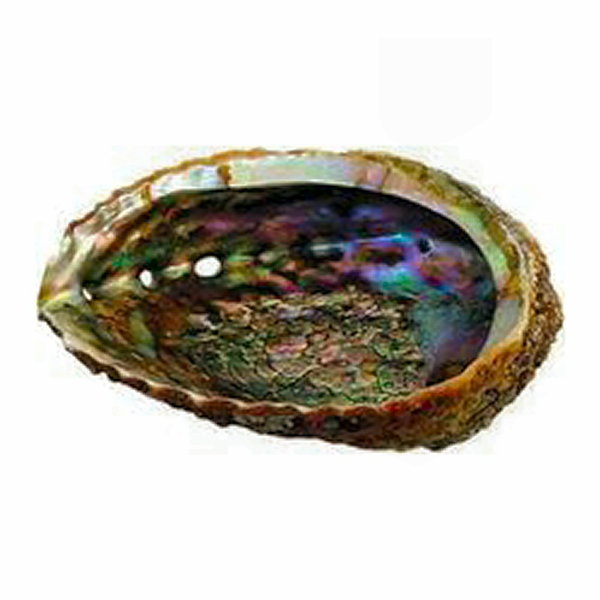 Abalone Shell 5 to 6 inch for Smudging