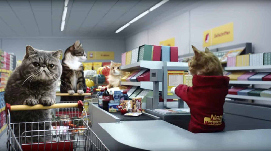 Grocery Cats Shopping from Netto Katzen - We love their Video!