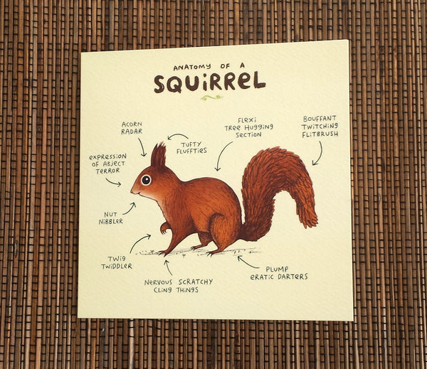 Anatomy Of A Squirrel Card