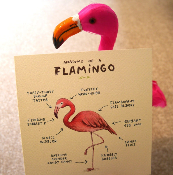 Anatomy Of A Flamingo Card