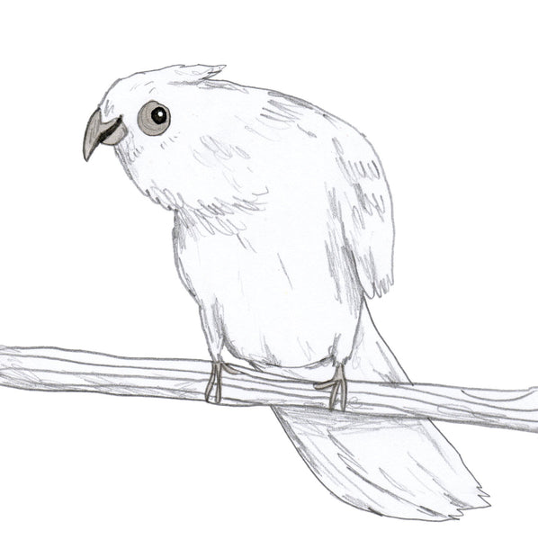 Bald-eyed Cockatoo