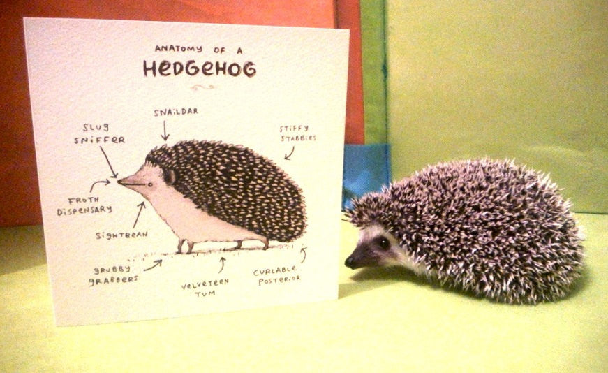 Anatomy Of A Hedgehog Card