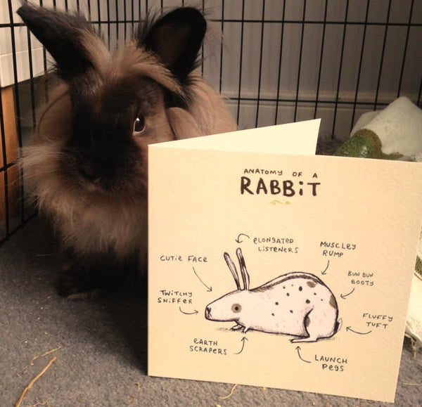 Anatomy Of A Rabbit Card