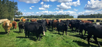 Hoven Farms- Whole Beef - Deposit