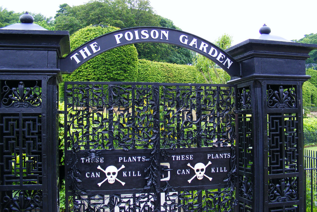 The Alnwick Poison Garden by Jane Canaway