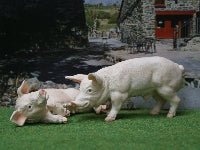 Dolls House Miniature Pigs, Quality Set Of 2, Pets and Animals - The Dolls House Store