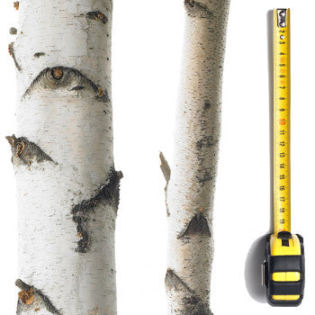 Birch Pole (1m-1.9m Length)