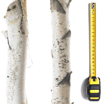 Birch Pole (2m-2.9m Length)