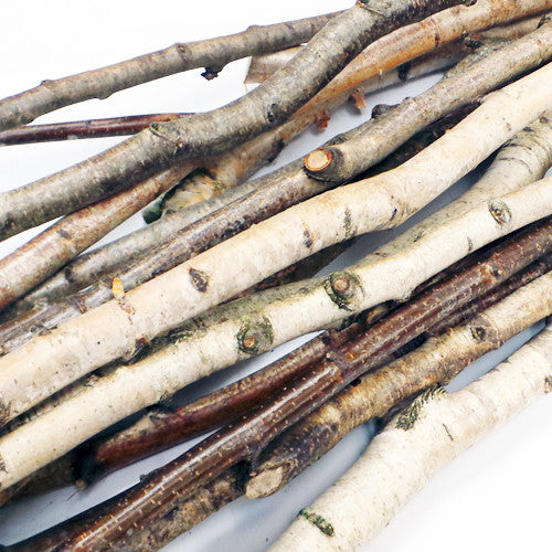 Branch Stems (Bundle of 12)