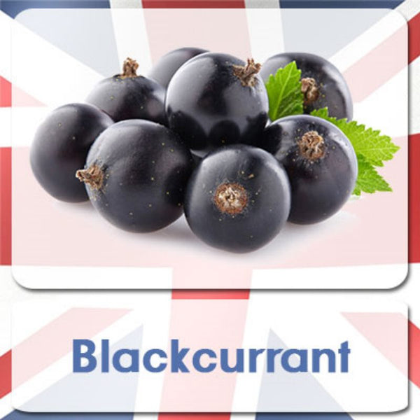 Motivape Ultimate Version 2 - Blackcurrant (10ml Bottle) | eliquid e-liquid