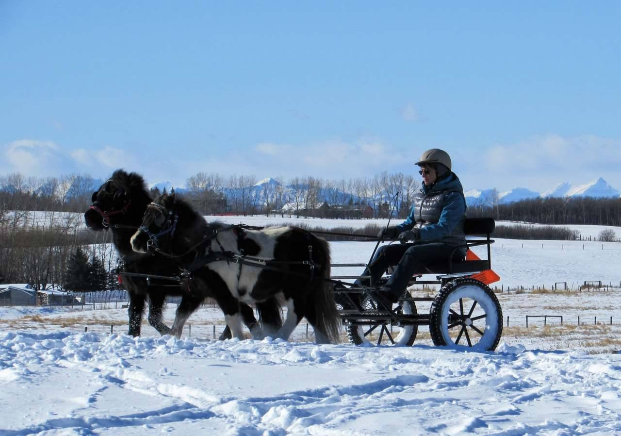Miniature Horse Carriages