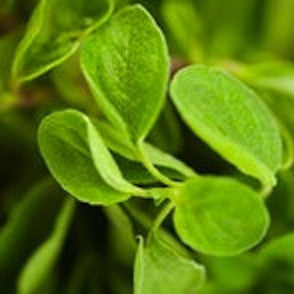 Oregano, Wildcrafted