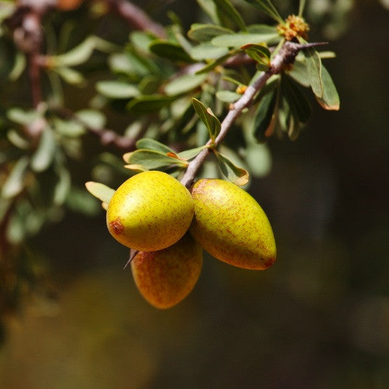 Argan Oil, Fair Trade