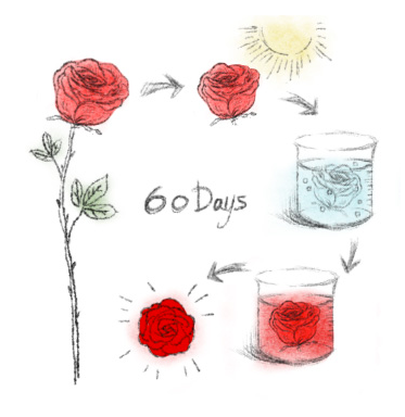 Rose Preservation Process