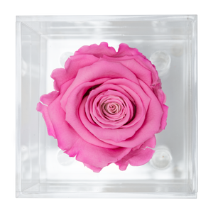 Pink Preserved Rose | Petite Acrylic Rose Box - The Only Roses