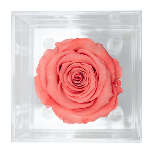 Light Pink Preserved Rose | Petite Acrylic Rose Box - The Only Roses